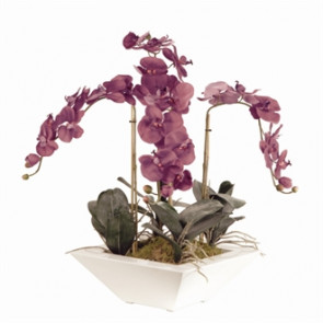 Pink Phal Orchid In White Trapezoid Pot 700mm